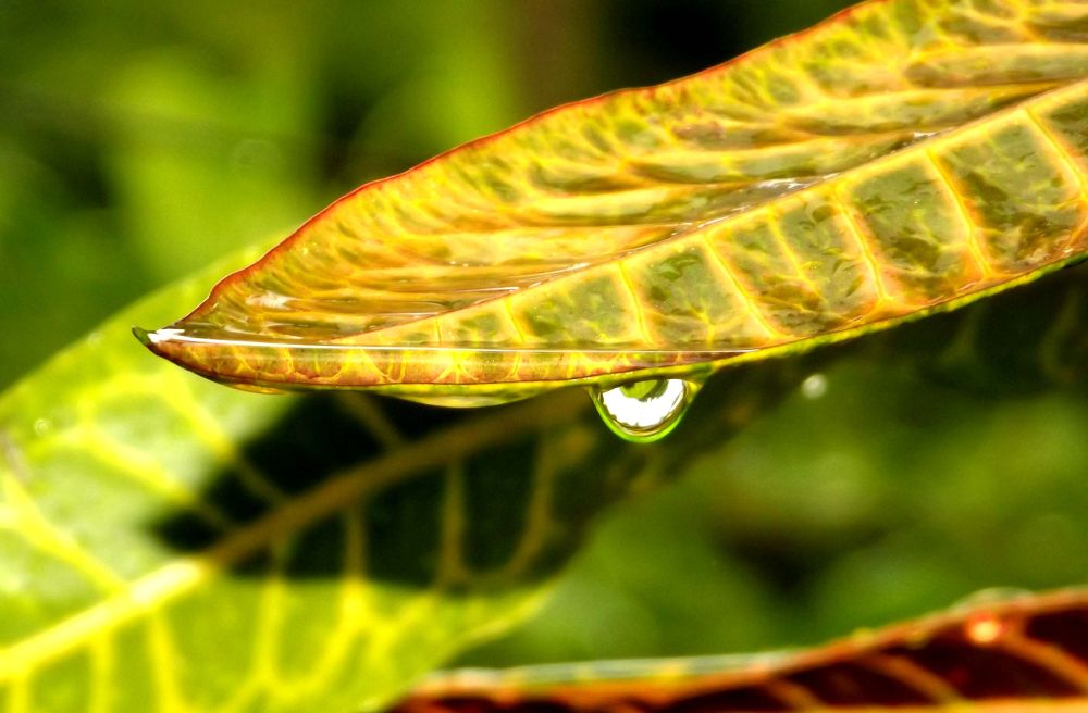 Water drop by sumonjhbd69