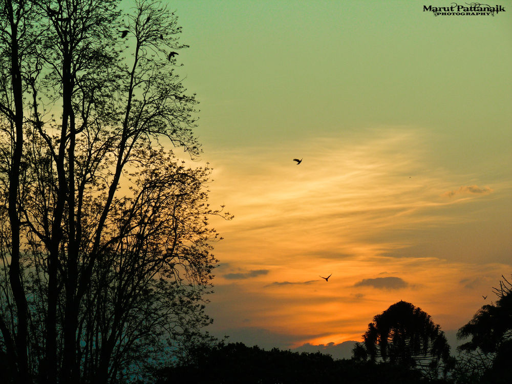 Sunset by Marut Pattanaik