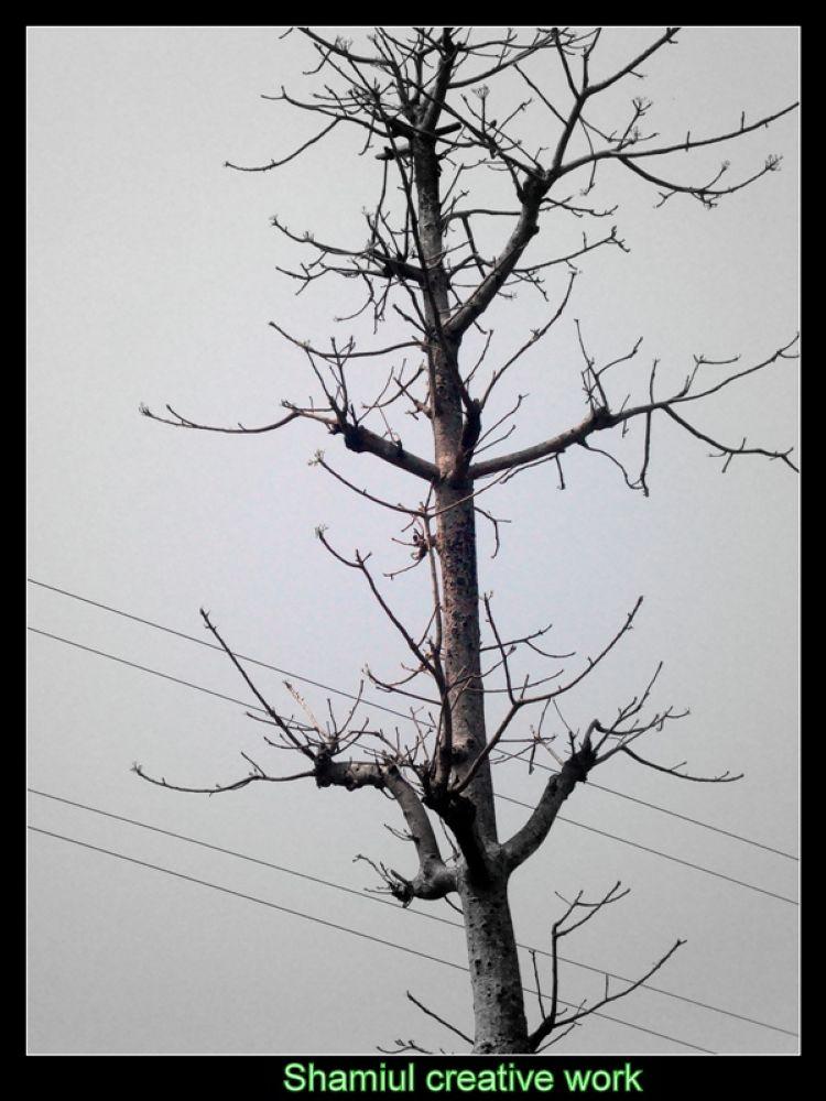 tree branch by shamiuljoy