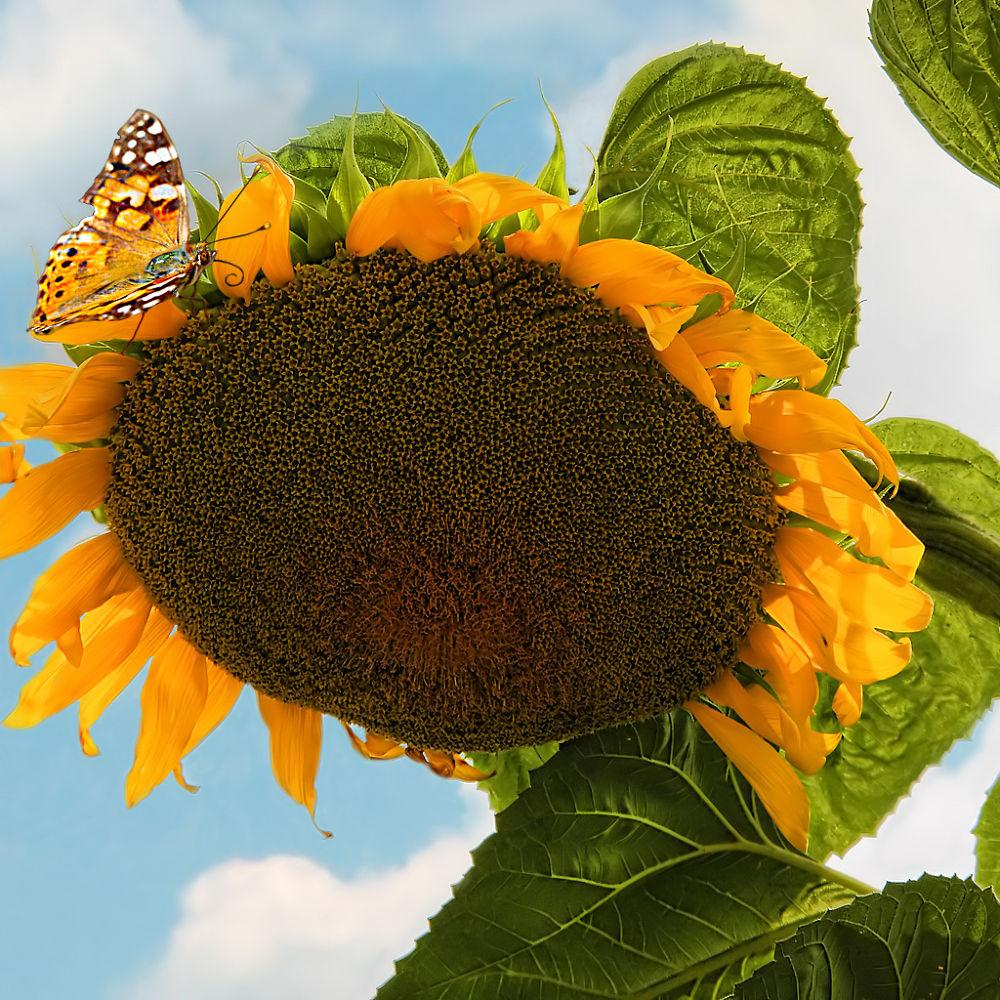 My sunshine by George Leontaras