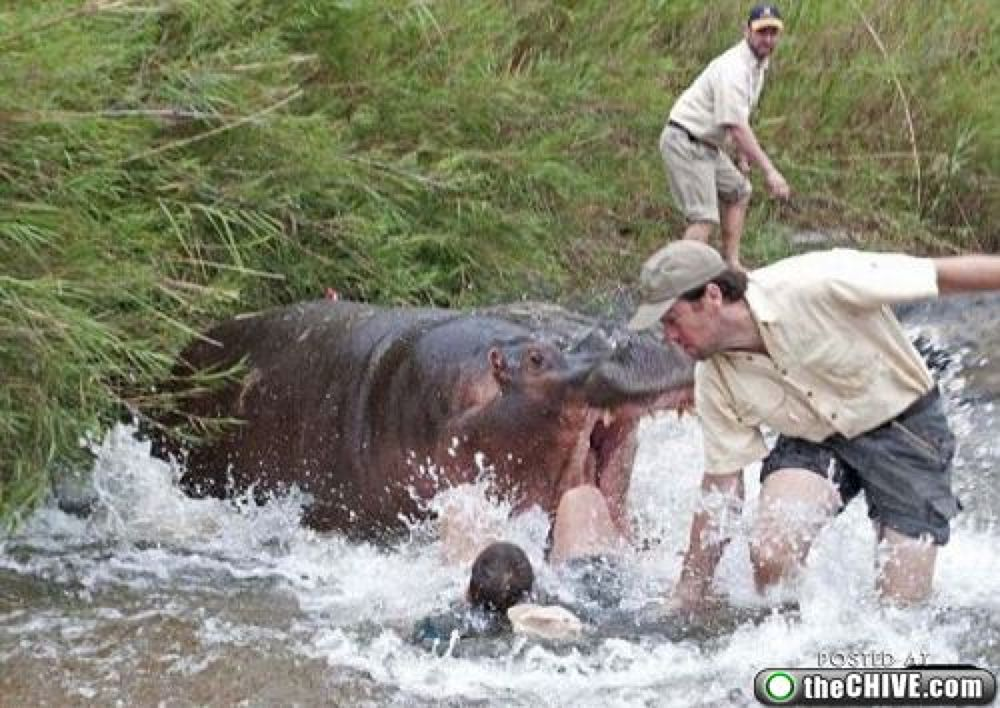 3 men and hippo by Gahhh