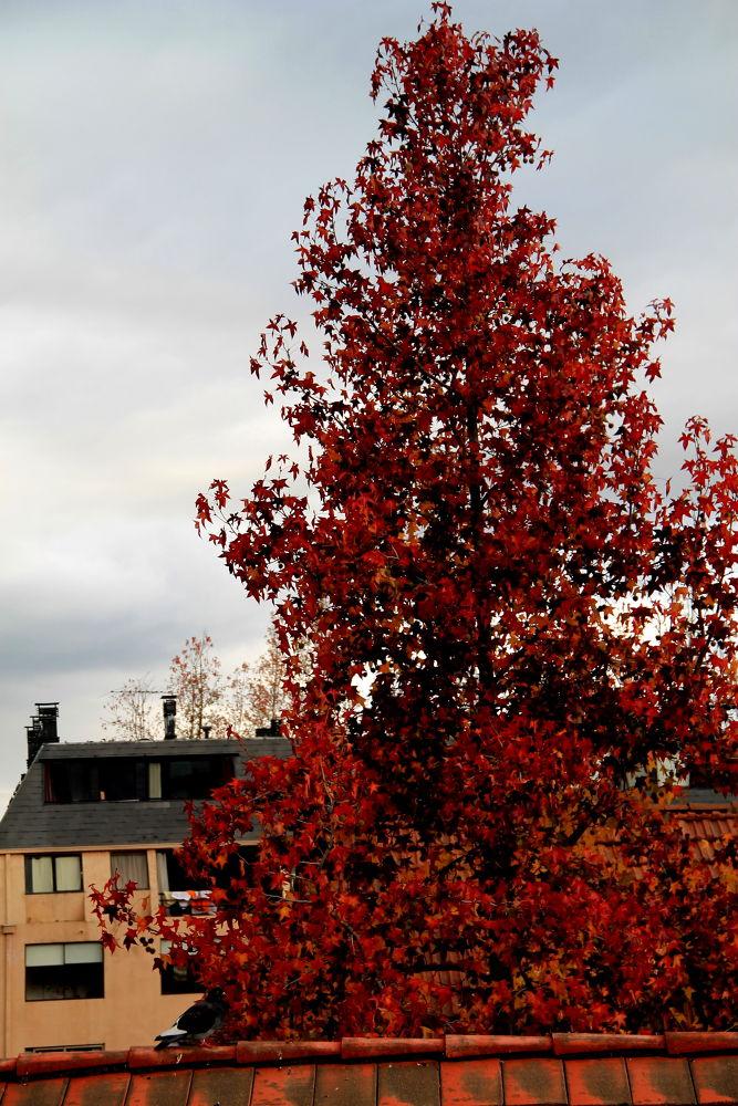 last days of autumn by ichernin