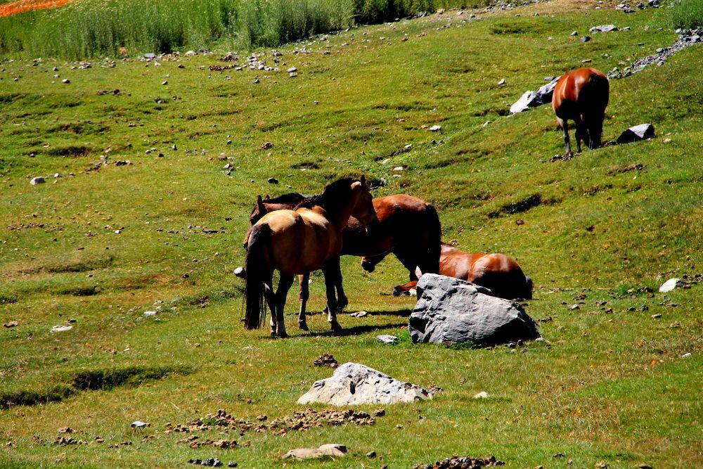 horses grazing by ichernin