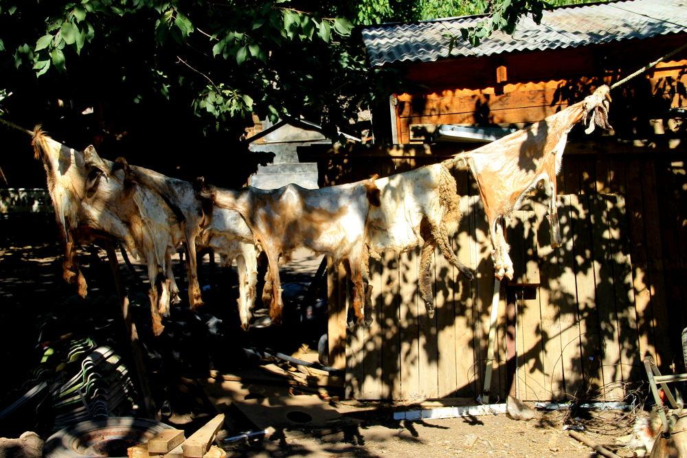 drying hides by ichernin