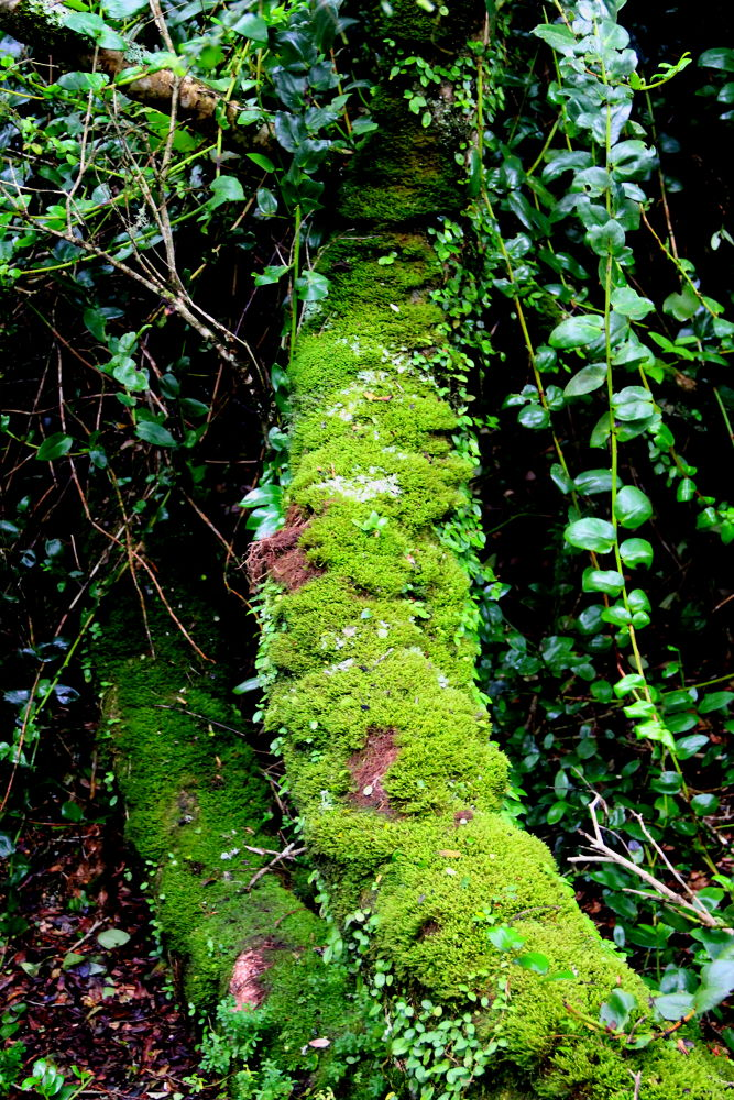 moss overtaking a fallen log by ichernin