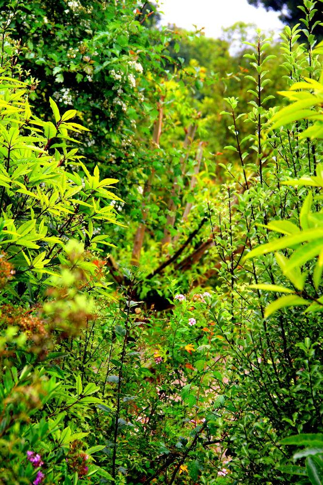 deep in the bush by ichernin