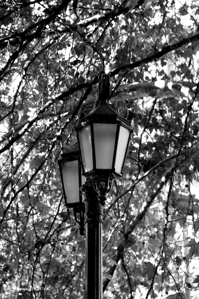 lamp posts by ichernin