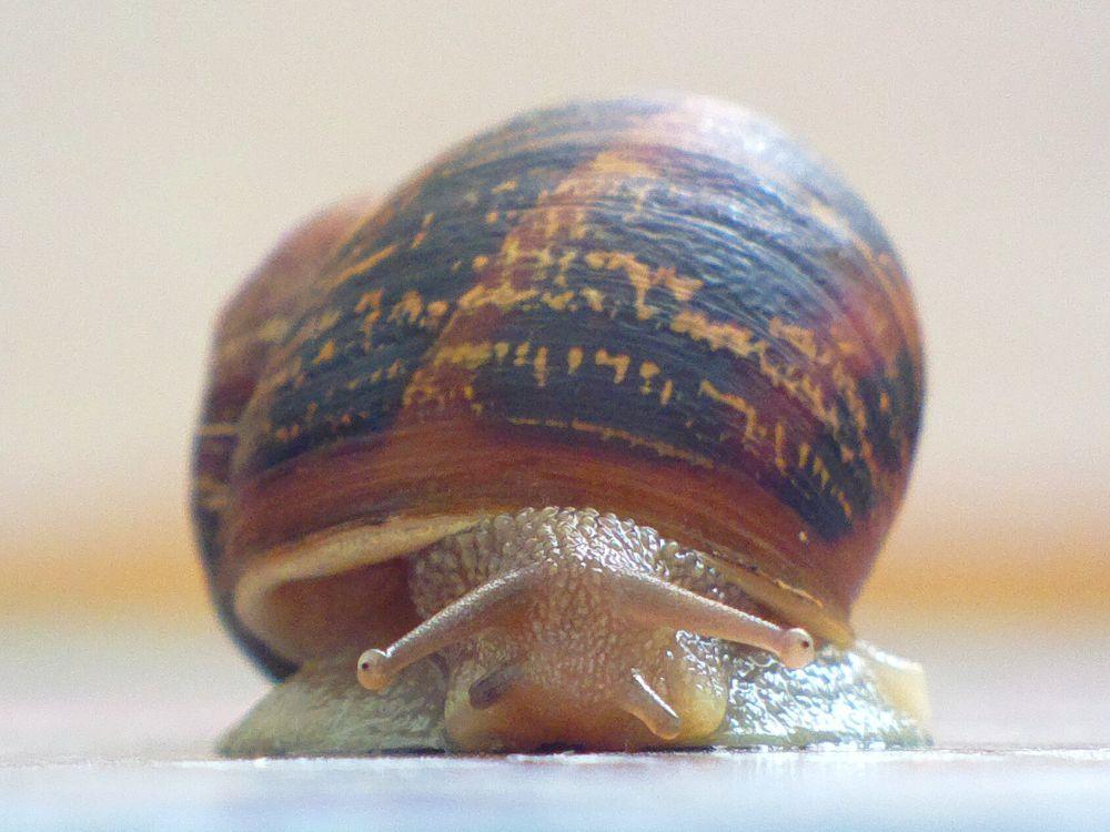 snail by IvanaSkobic