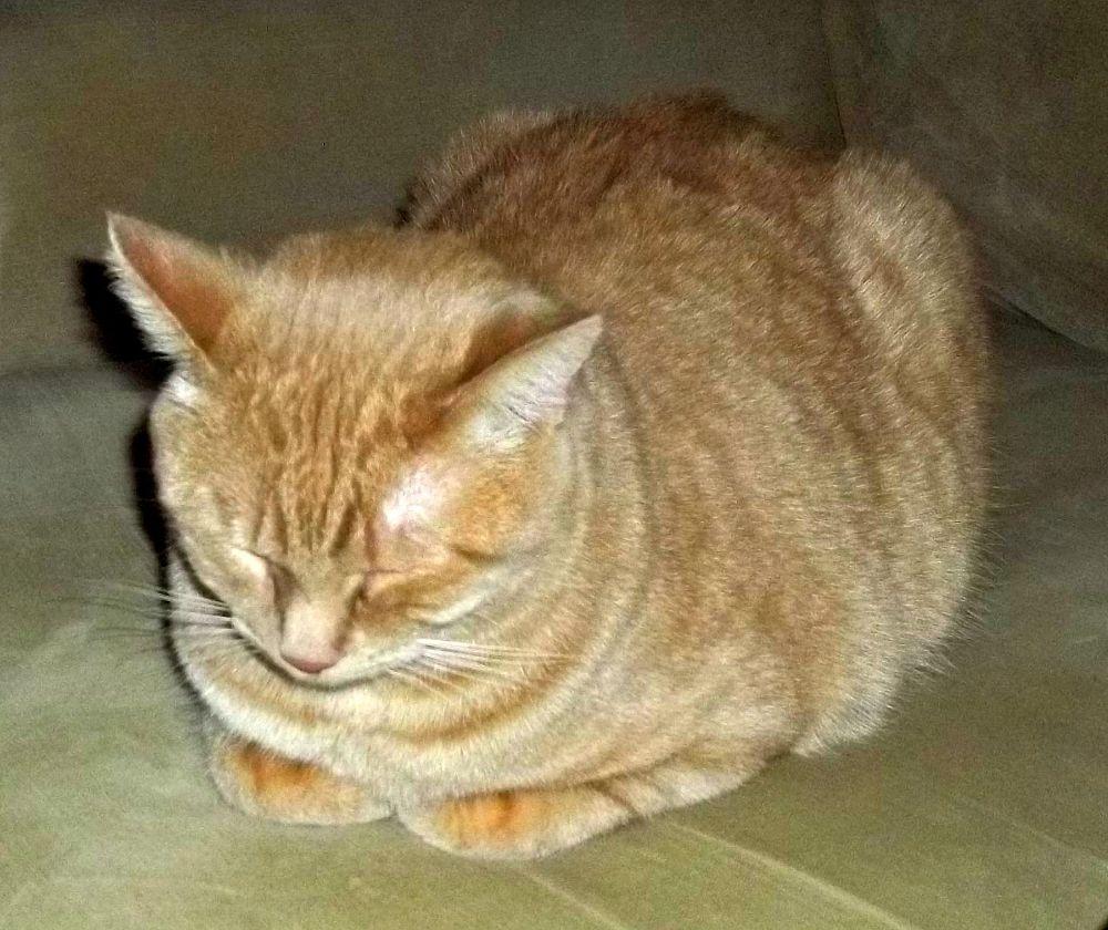catstuff 001 by PROMOD63