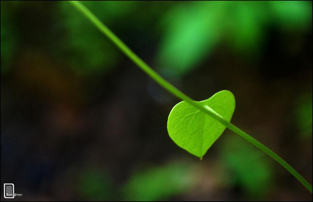 Green Heart by surajthakoor
