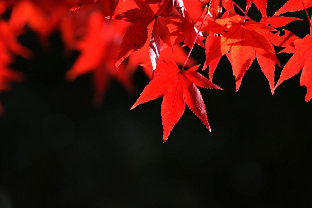 fall by dz.cj