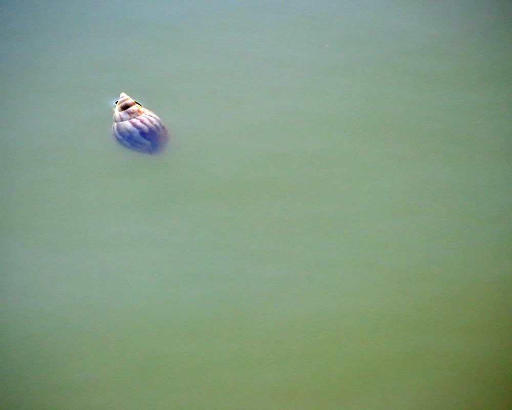 Floater by derekzurn79