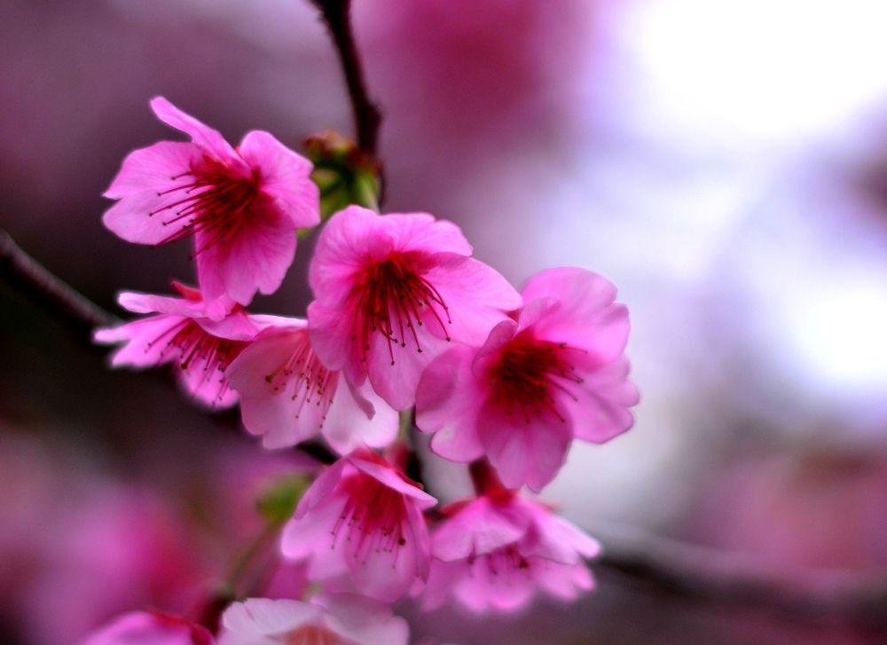 Blossoms by derekzurn79