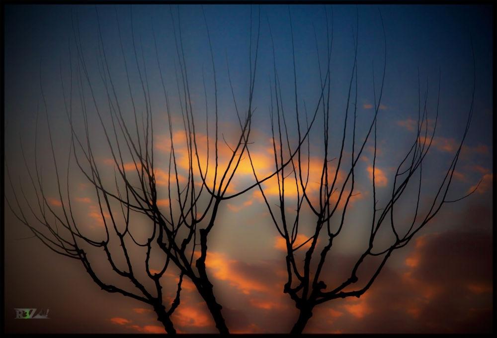 Winter Dream by Reza Abbaszadegan