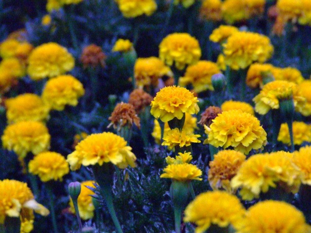 Flowers by lizellelemmer88