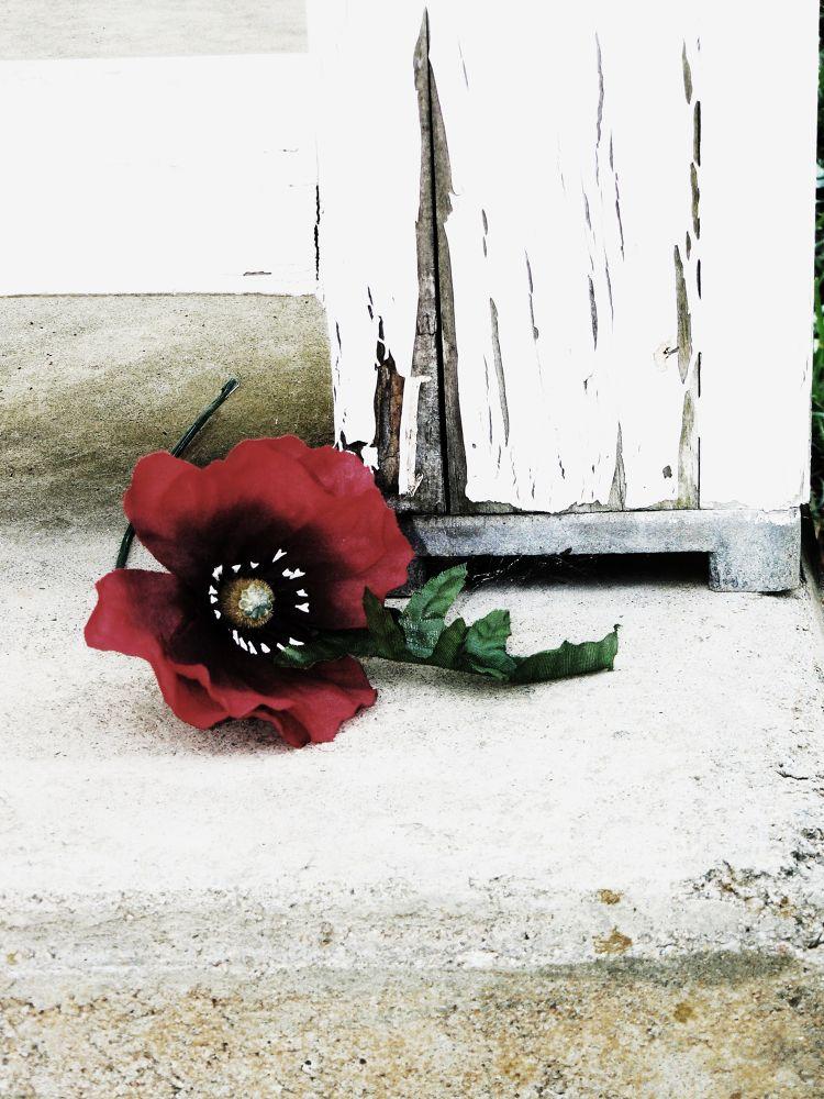 Distressed Rose.JPG by reaystevens7