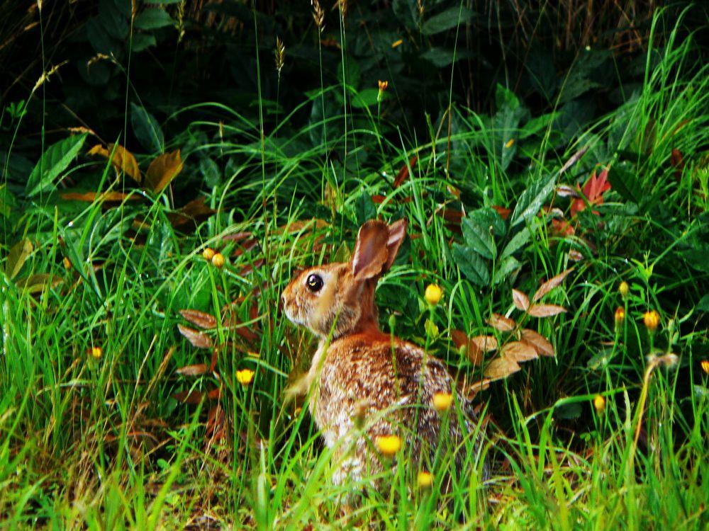 Rabbit.JPG by reaystevens7