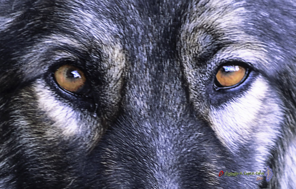 Los ojos de Mora - Mora´s eyes  by Augusto E. López Calvo