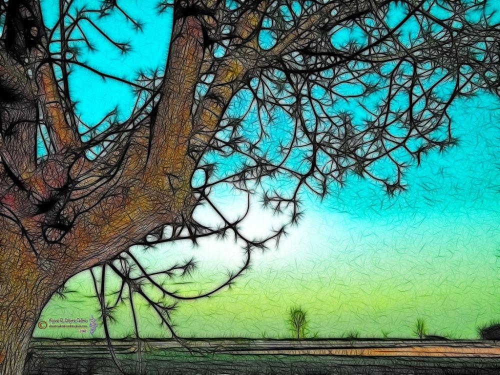 Photo in Random #ilustración #foto-edición