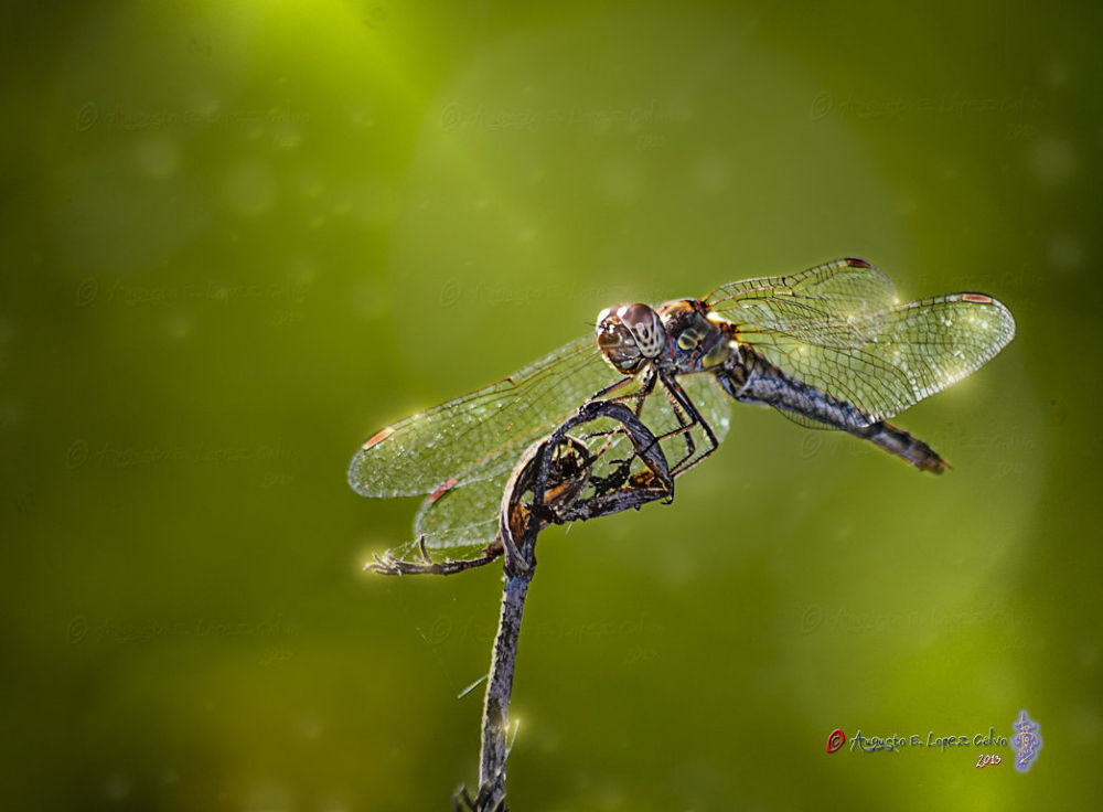 Photo in Nature #insectos #libélulas