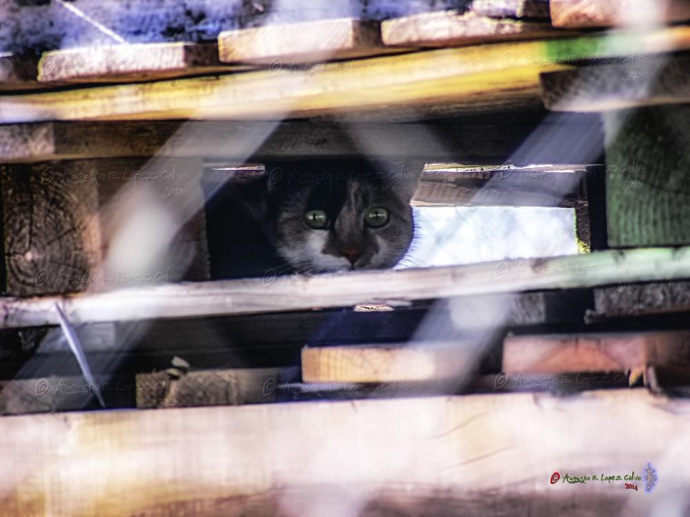 Photo in Animal #gatos #felinos