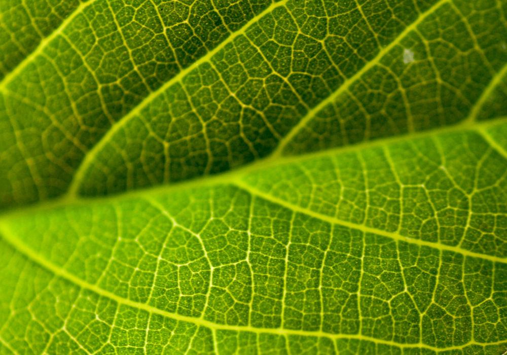 Leaf Texture by Raj Marlecha
