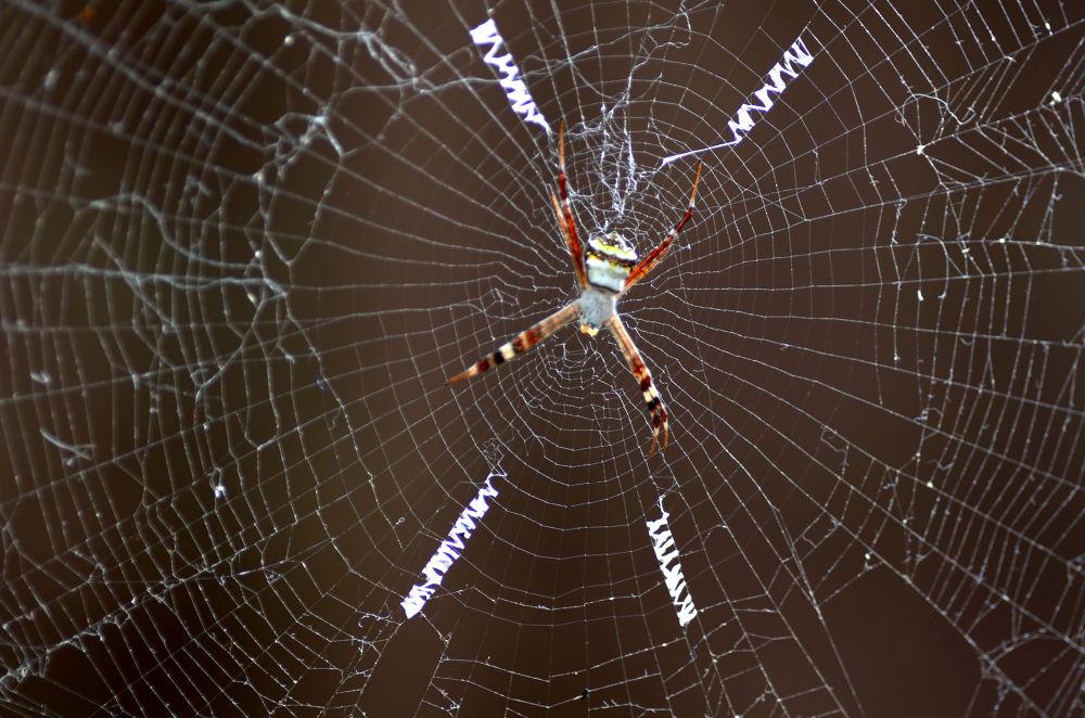 Cross Spider Web by Raj Marlecha