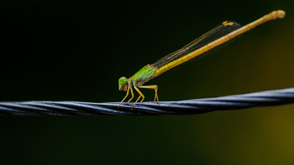 Dragonfly by Raj Marlecha