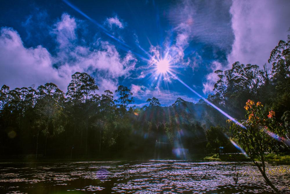 Flare by Raj Marlecha