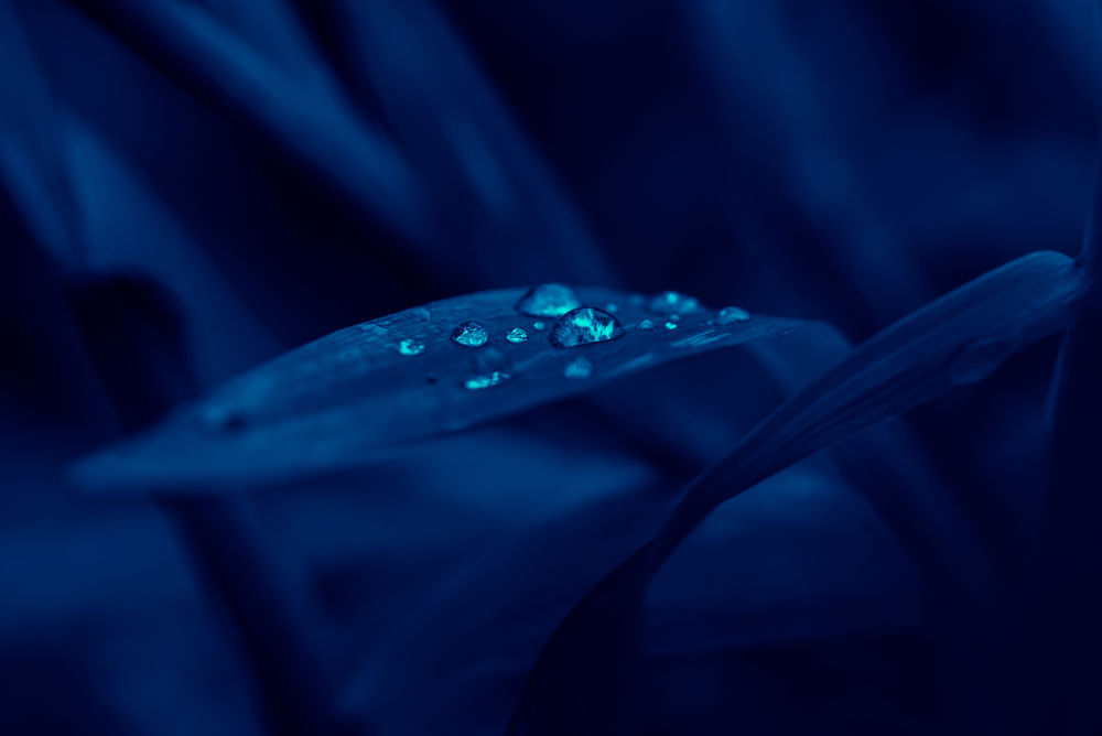 """Dew-drops are the gems of morning, But the tears of mournful eve!"" by Raj Marlecha"