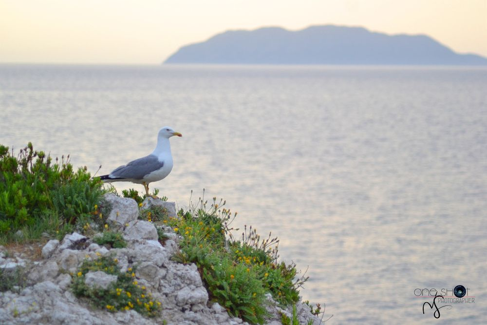Seagull and the sunset by NoemiSava