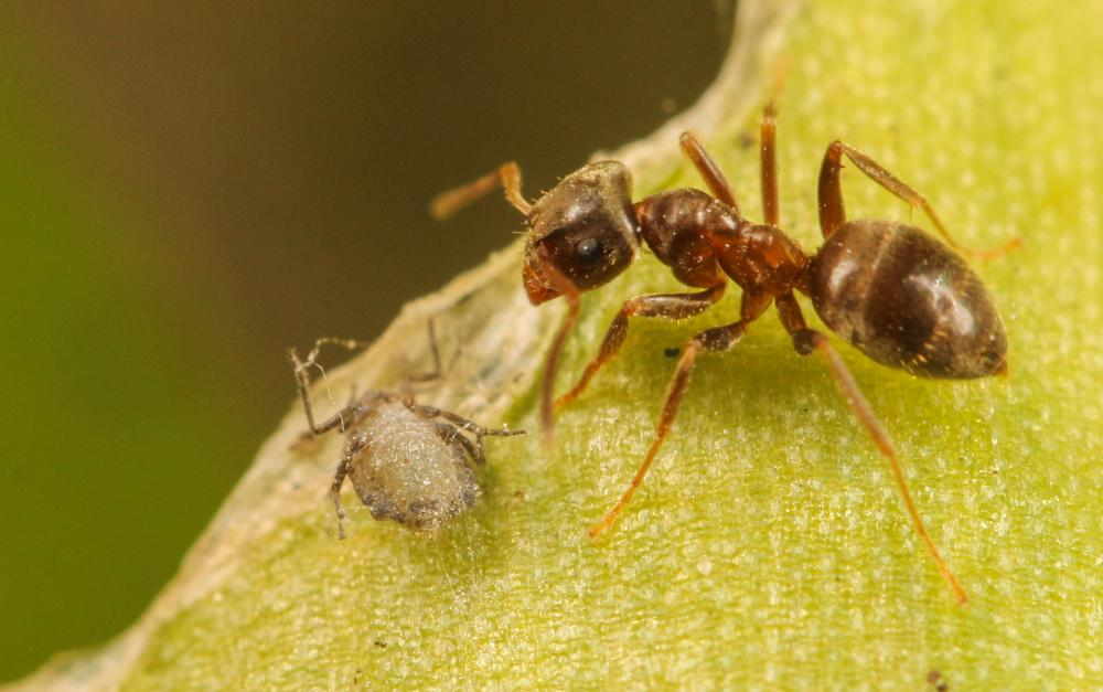 Ant by Amanda Blom
