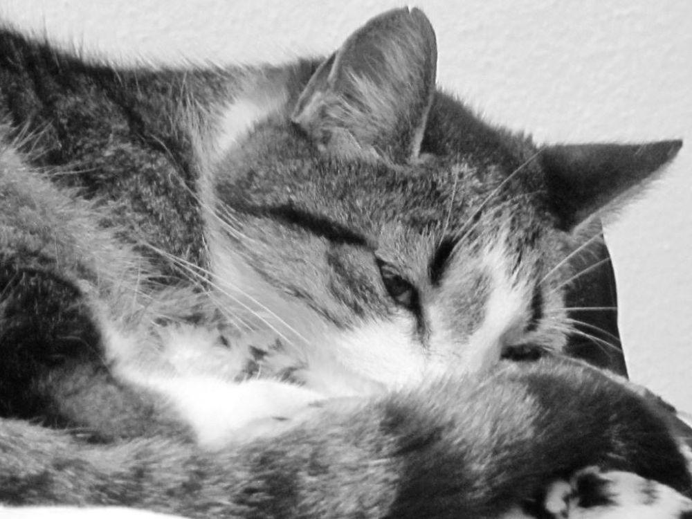 Sleepy by Monica Pires