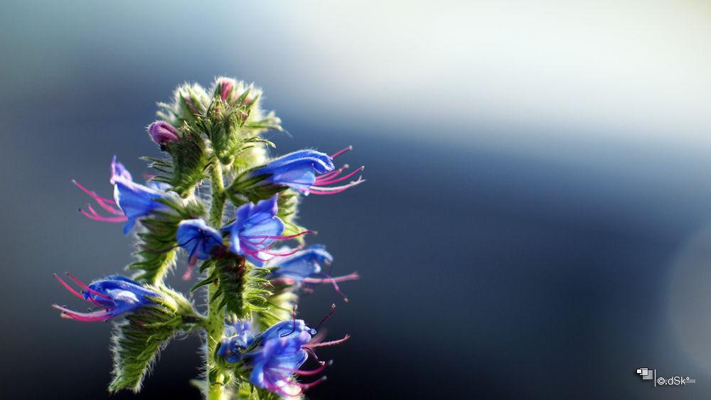 Flower by DuskoKovacic