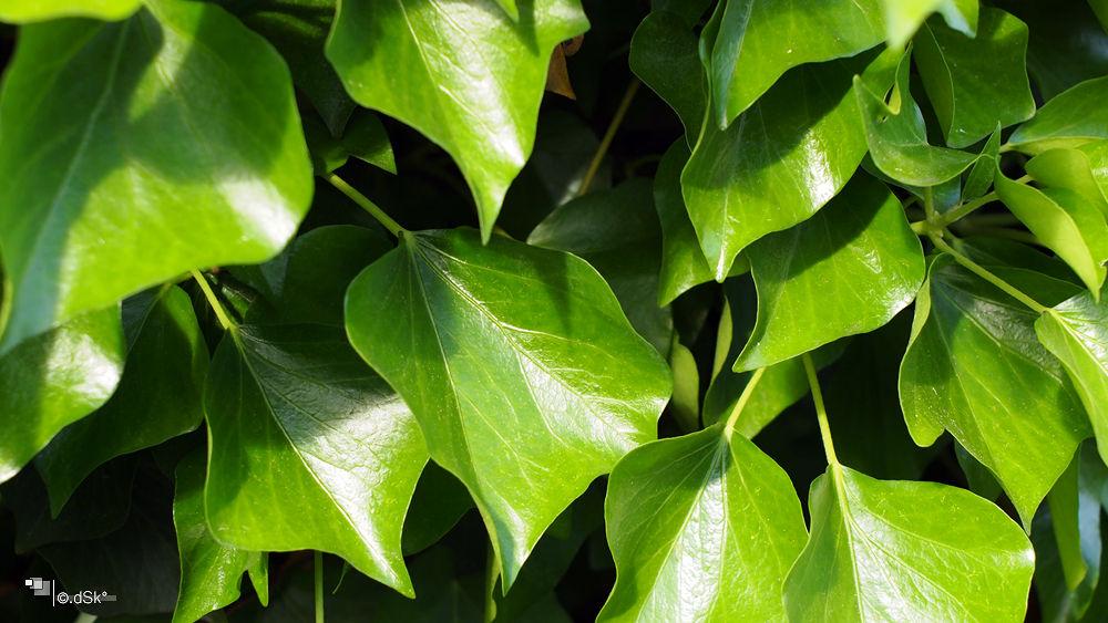 Leaves by DuskoKovacic