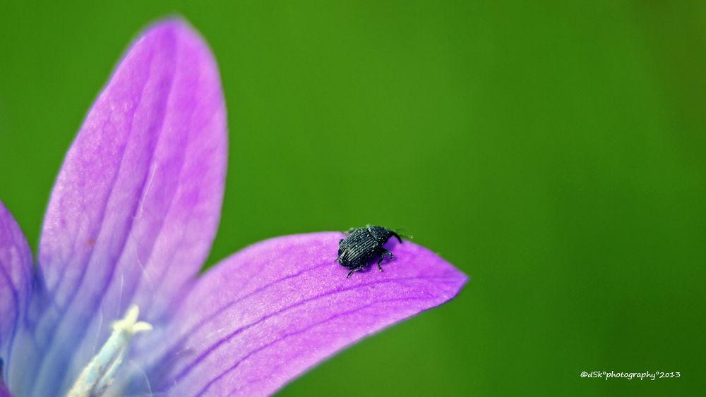Bugs life by DuskoKovacic