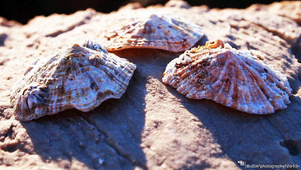 Sea shells by DuskoKovacic