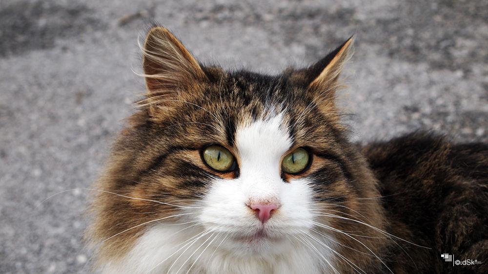 Photo in Animal #cat #animal