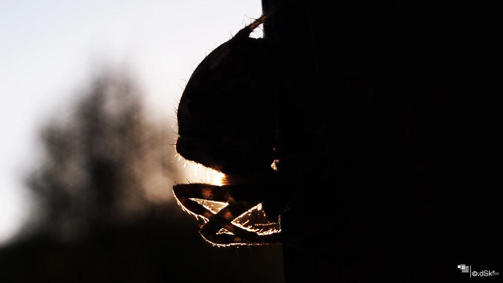evening sun... by DuskoKovacic