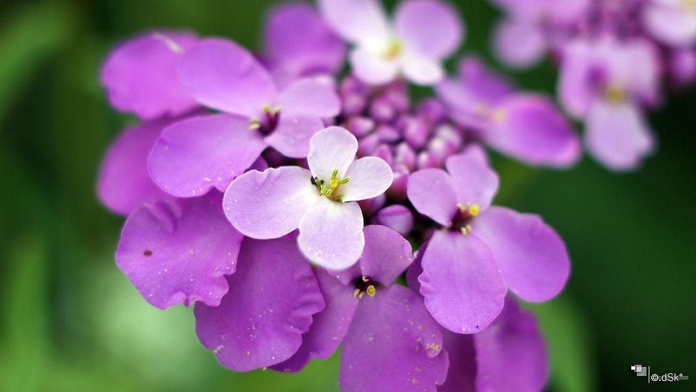color pf purple  by DuskoKovacic