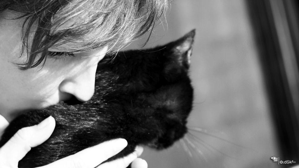 Photo in Portrait #portrait #cat #love #animal #pet #emotions