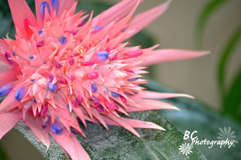 Flower by alisadoolan