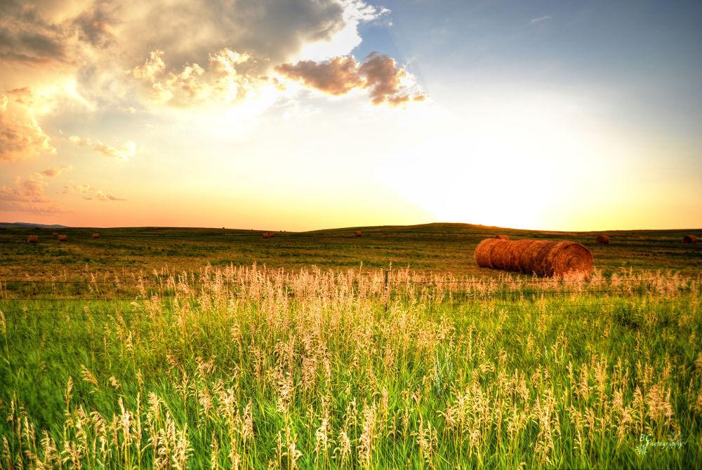 Row of Hay by alisadoolan