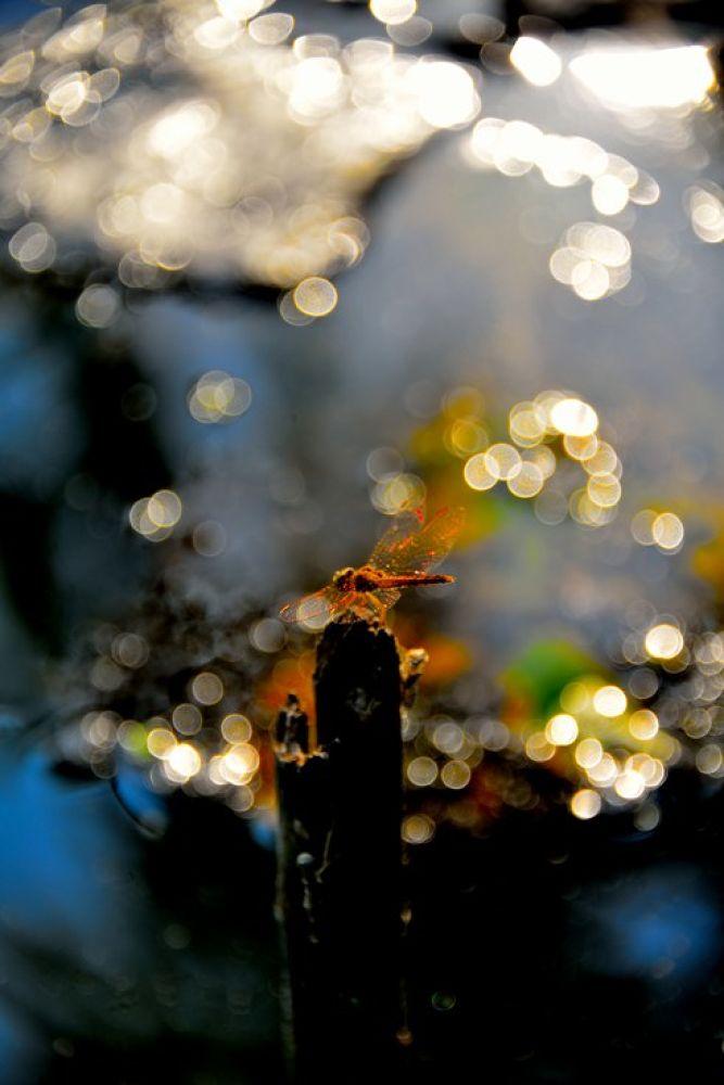 Dragonfly by Naret Singusaha