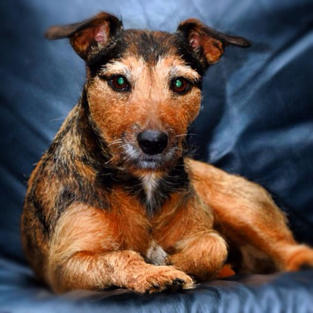My dog Mimmi, half Jack Russel terrier and half German terrier 12 years old by mattiasallroth