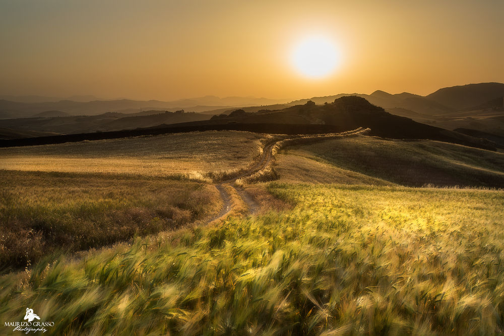 Ultime luci sul campo di grano by Maurizio Grasso