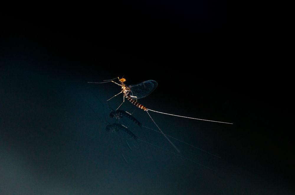 minimal mayfly by eugenbushed