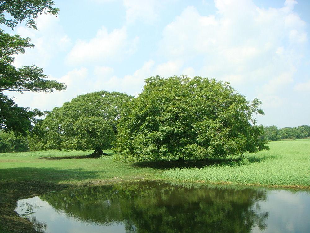 Green Bangladesh-2.JPG by Mohammed Elius Chowdhury