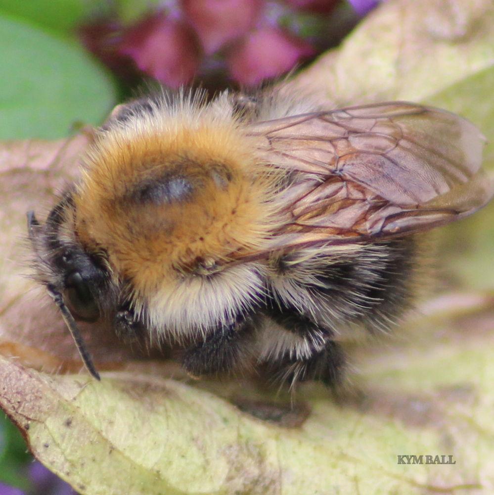 SLEEPING BEE by kymball58
