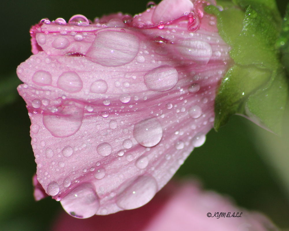 DROPLETS OF RAIN by kymball58